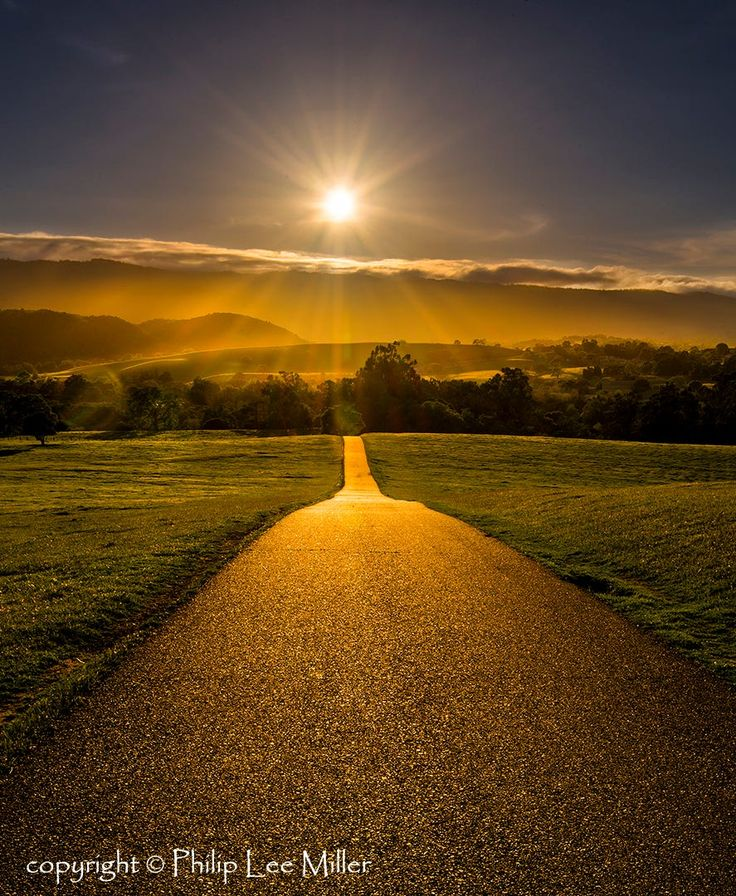 The Golden Path (Stanford Dish Trail, California) by Philip Miller on 500px