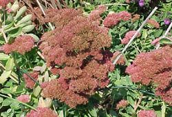 Xeriscaping Plants - Drought Resistant Options to Xeriscape