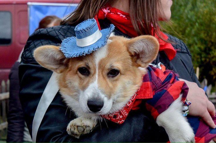 Чилли - маленький ковбой Chilli - little cowboy