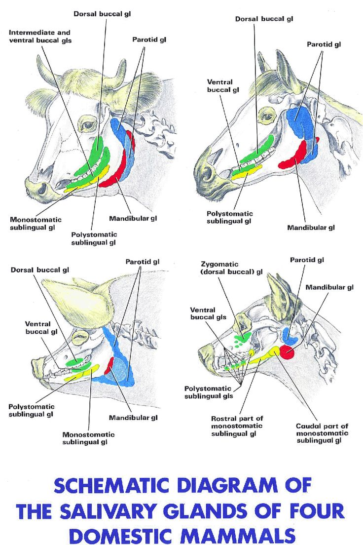 49 Best Veterinary Anatomy Physiology Images On Pinterest