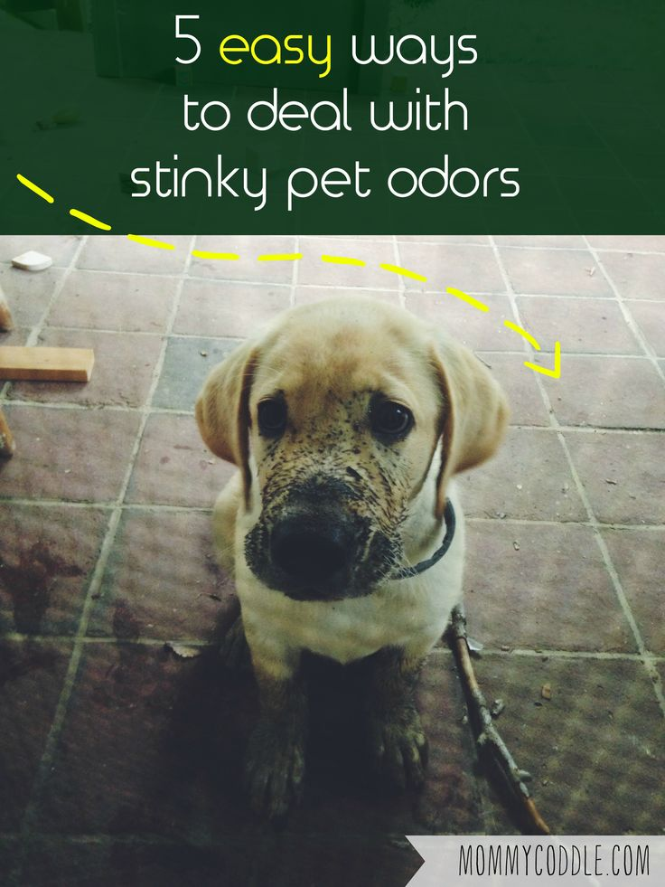Great post on 5 really simple ways to deal with pet odors in your home.