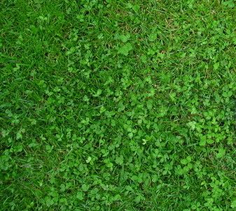 Pro Time Lawn Seed PT 769 Rough & Ready grass and microclover seed mix