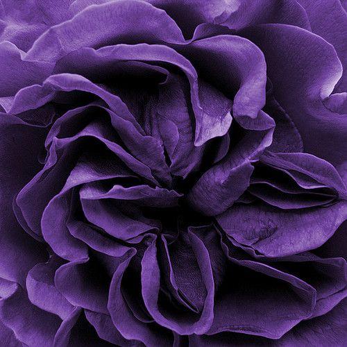 25 Best Ideas About Blue Purple Bedroom On Pinterest: Best 25+ Purple Flower Names Ideas On Pinterest
