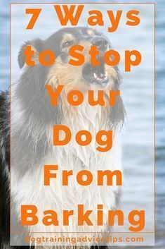 7 Ways to Stop Your Dog From Barking | Dog Training Tips | Dog Obedience Training | Dog Training Commands | http://www.dogtrainingadvicetips.com/7-ways-stop-dog-barking #DogBarking #dogtraining