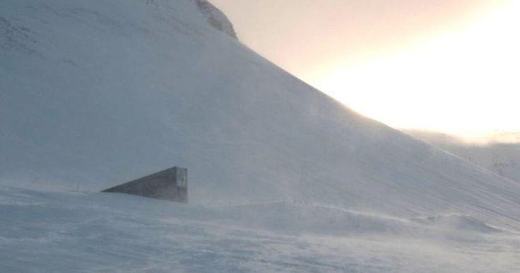 'Cofre' de sementes no Ártico pode ser esperança de lavouras do futuro