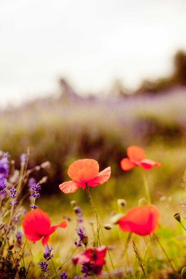 beautiful flowers in a field.