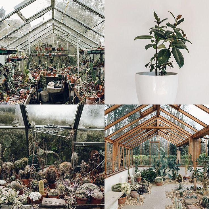 Engelska trädgårdar och fina växter