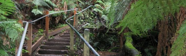 Finally got around to do the 1000 steps Kokoda Walk at Mt Dandenong. It is busy on weekends, but still a great outdoor workout and accessible by public transport