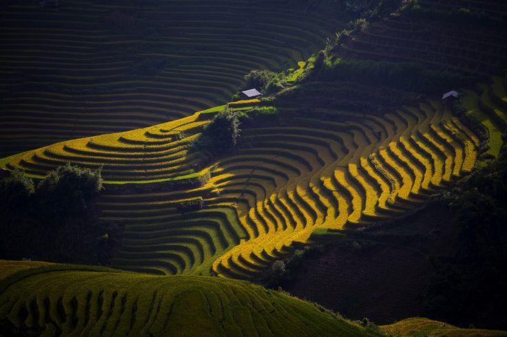 Утренний свет озаряет поля рисовой фермы в Му Ченг Чай, Вьетнам. Фотография сделана в сентябре 2015. Автор фото: Сурават Судха