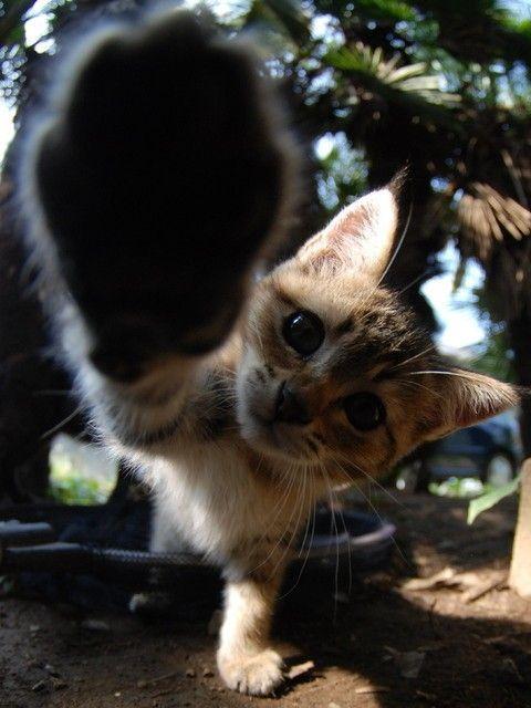 Hey! Que bom ver você aqui! Toca aqui,amigão! #gatos #amigos #filhotes