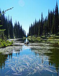Parks Canada - Mount Revelstoke National Park of Canada - Summit of Mount Revelstoke Trails