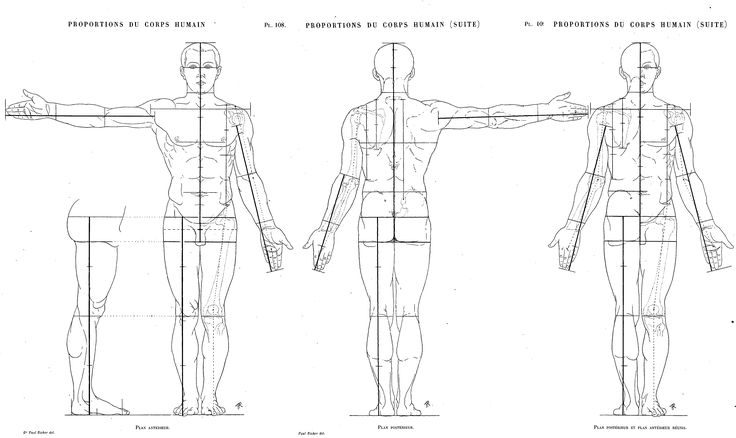 The best Average male Proportions chart by Paul Richer from the book Artistic Anatomy ★ || CHARACTER DESIGN REFERENCES (pinterest.com/characterdesigh) • Do you love Character Design? Join the Character Design Challenge! (link: www.facebook.com/groups/CharacterDesignChallenge) Share your unique vision of a theme every month, promote your art, learn and make new friends in a community of over 12.000 artists who share the same passion! || ★