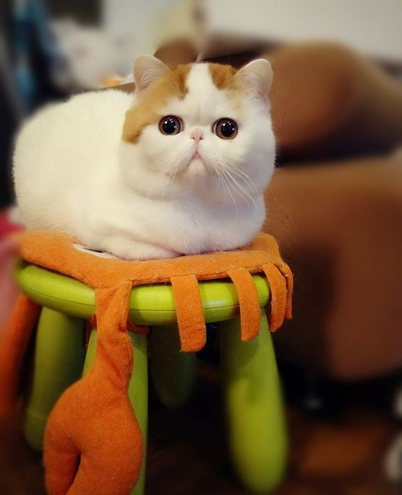cute cat with big - photo #39