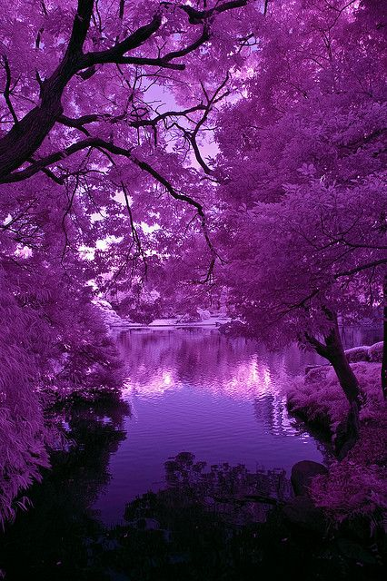 Beautiful shades of purple.