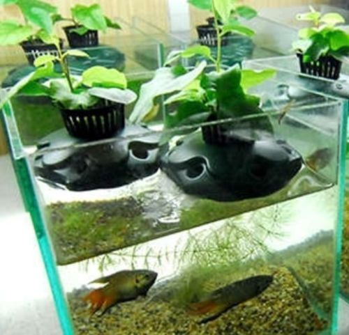 34 best images about gardening on pinterest workshop for Best fish for hydroponics