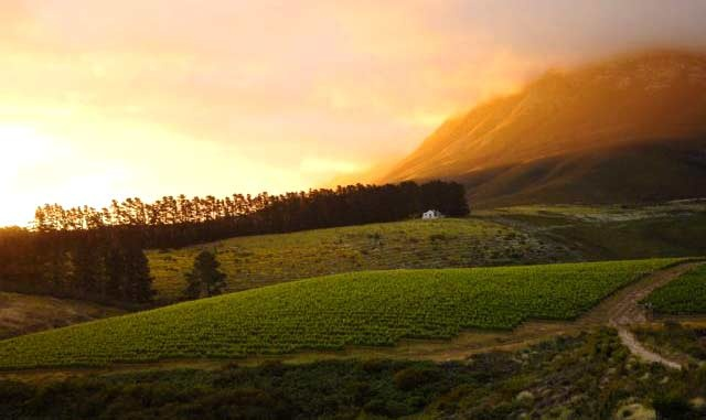 Hermanus Wine Route, South Africa, Going here soon!!!