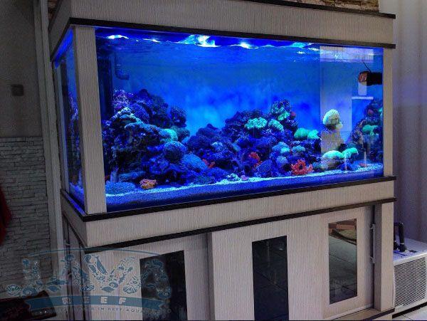 instalasi aquarium air laut di rumah