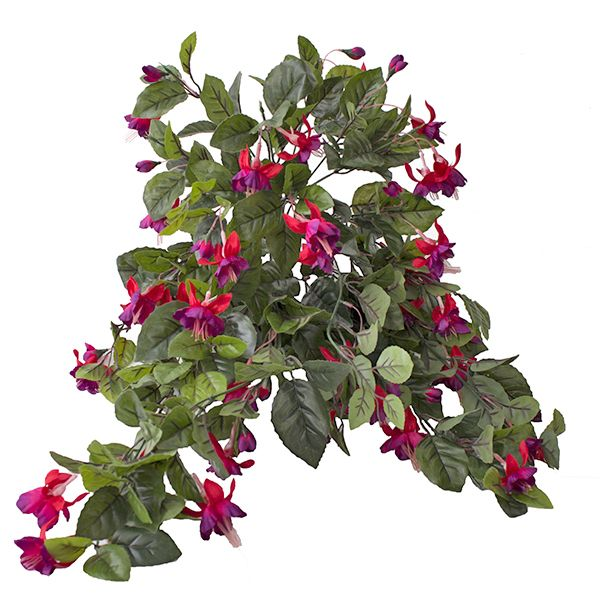 Les 72 meilleures images du tableau plantes et arbustes for Arbuste exterieur