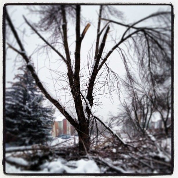 Amazing photo of the ice storm aftermath from instagram user Topher Watcher #toronto