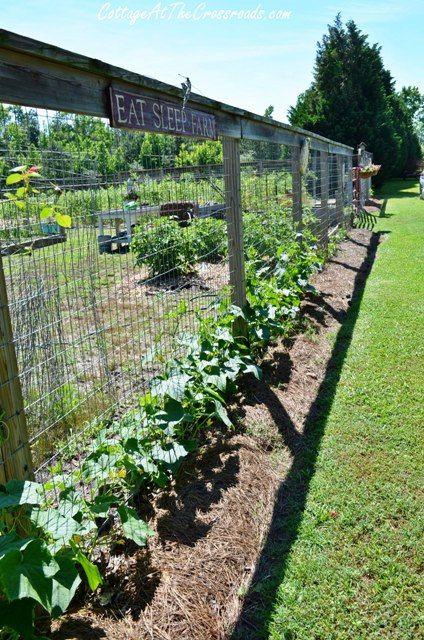 Best 25 vegetable garden fences ideas on pinterest for Vegetable garden pergola