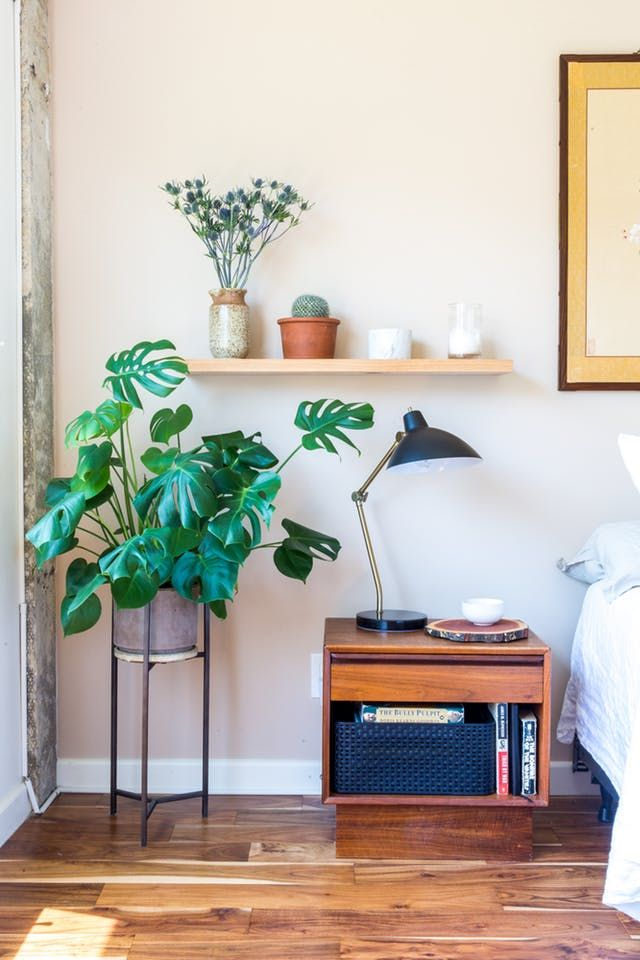 Have You Met The Other Monstera Apartment Therapy Bedroom Plants Indoor