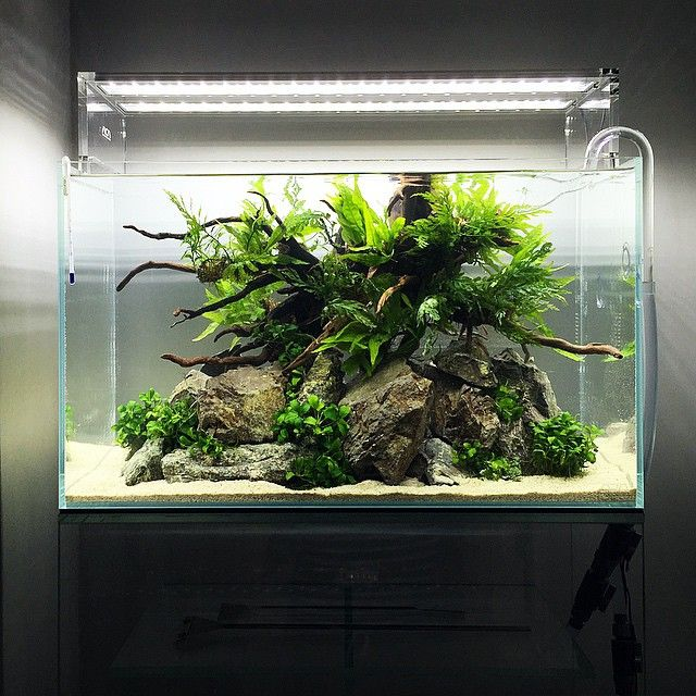 Aquascape Style: Found My Next Scape Style. Credit: @tsunosho On Instagram