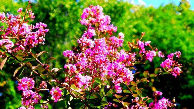 Pink flowers on a sunny Sunday