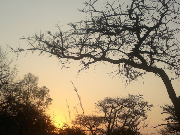 Our farm at sunset, late winter, in Nelspruit area, Mpumalanga South Africa