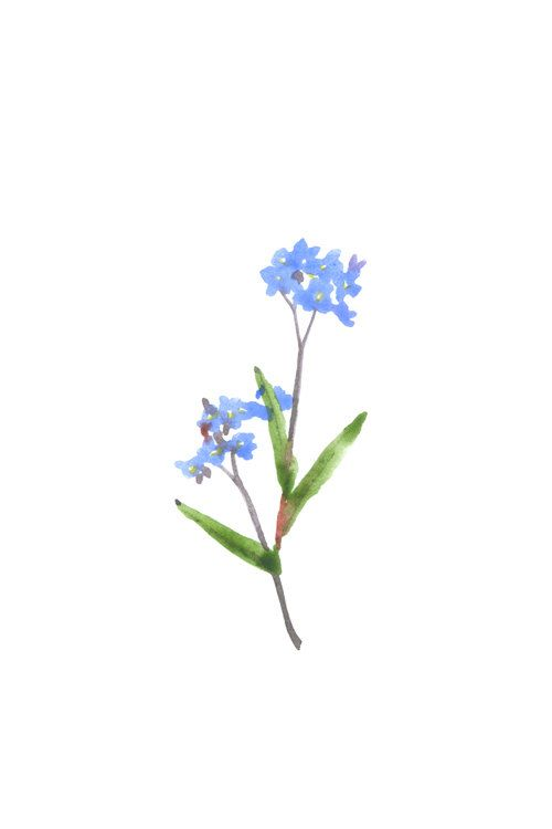 forget me not watercolor set of small cards by mywhiteroom
