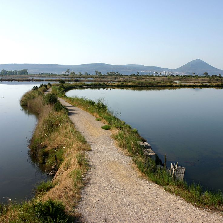 Divari Lagoon: Near the harbour of Pylos you can find the wonderful Divari Lagoon. With rare Birds, Turtles ect.  #divarilagoon #pylos #messenia #greece #voidokilia