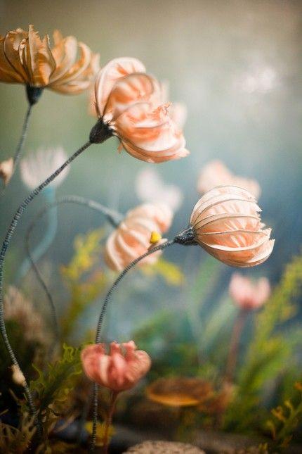soft pink sea lillies - Prehistoric underwater flowers.