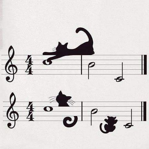 732 Best Cats & Music Images On Pinterest