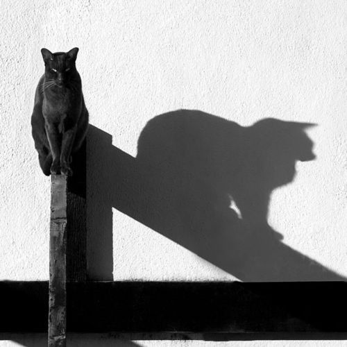 Black cat shadow play By Tina Ind
