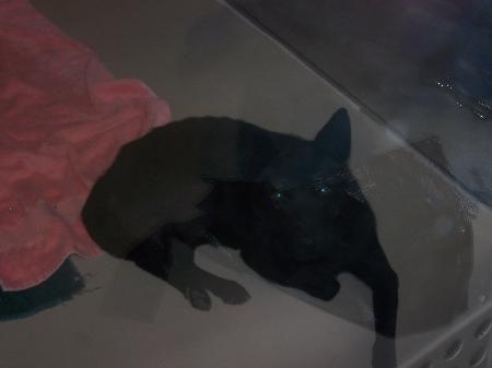 Adopt A Dog Calgary Pound