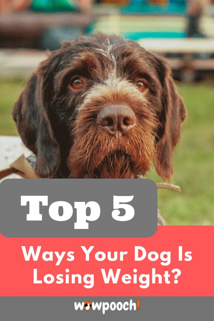 how to help a dog with pancreatitis gain weight