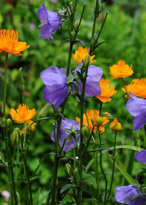 3578 best Flower Names A to Z images on Pinterest Nature
