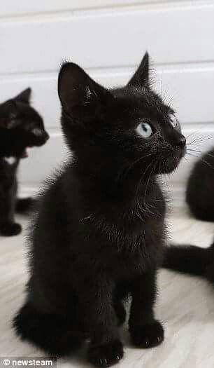 Noir USA chatte