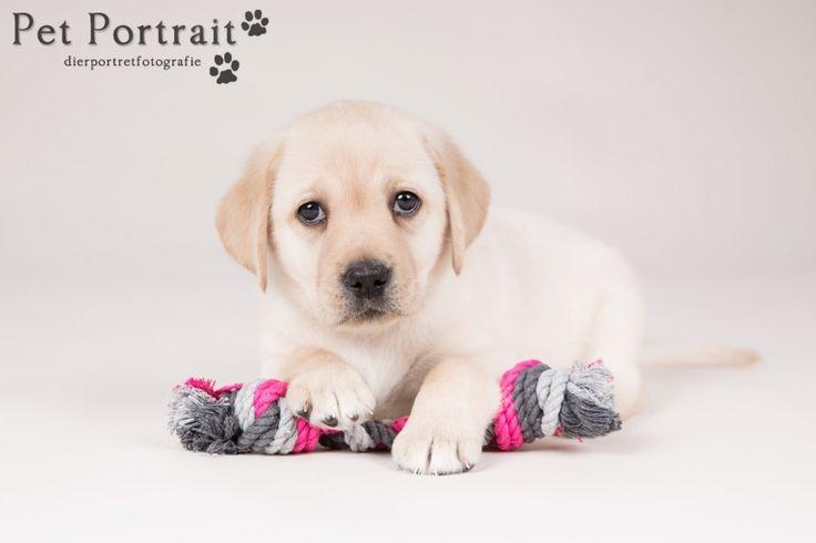 Hondenfotograaf Hillegom - Nestfotoshoot Labrador retriever pups geel en zwart-26