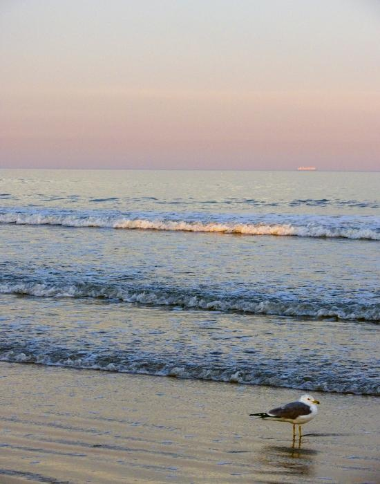 Atlantic Beach, Florida.  What a relaxing place to walk and find shells.  #Atlantic Beach #Florida #walk on the beach