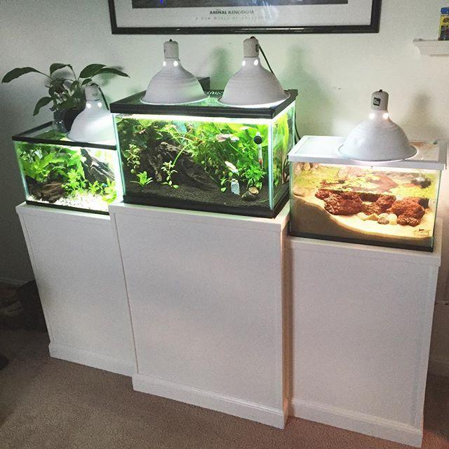 how to make betta fish tank