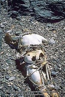 Mallory's body, found!