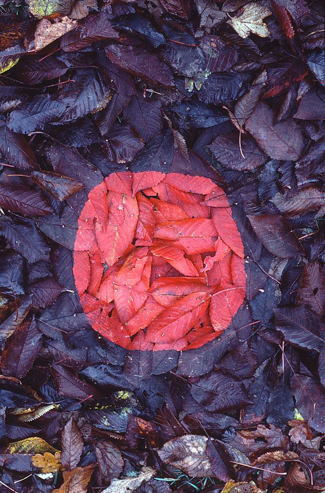 From Andy Goldsworthy's Diary: 4th Nov Swindale Beck- back to cherry tree - made cherry red patch very difficult - not many very red leaves - but managed - I think I am pleased but might try again next year - when colour might be fuller - cold again calmer - easier to work leaves (held with thorns) wet but not raining until now. drizzle.