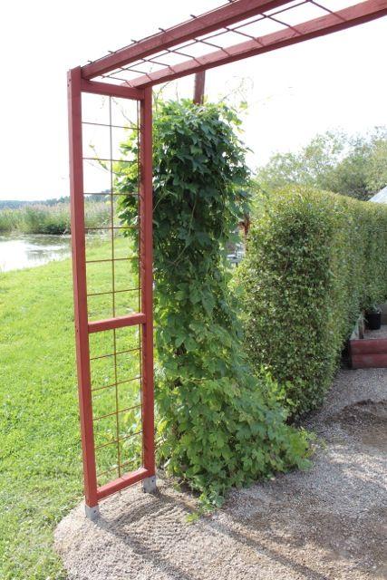 Bildresultat för portal trädgård