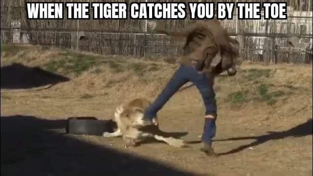 Pin By Amanda Mahoney On Tiger King Memes Animals Memes Tiger