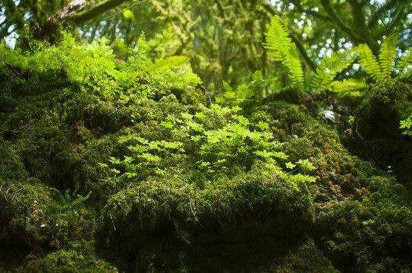 Лес в Мезмае