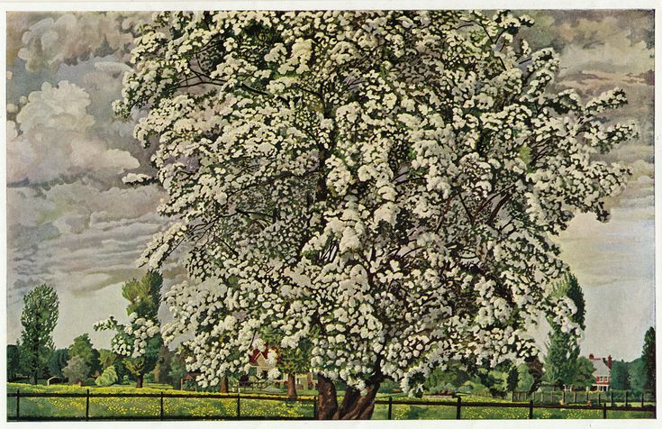 'The May Tree' by Stanley Spencer, 1932