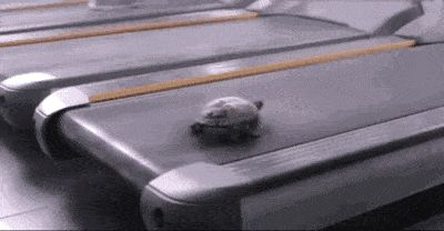 21 Best GIFs Of All Time Of The Week #169 from best GOAT and Best of the Web
