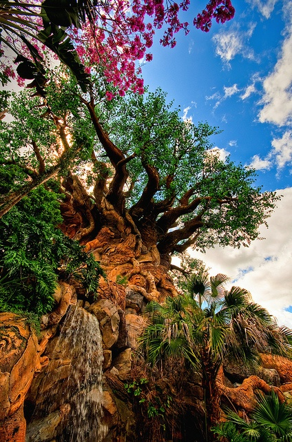 Who else loves Disney's Animal Kingdom® Theme Park as much as our comical growers? #craisinsadventure