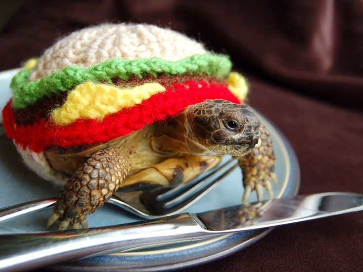 PetsLady's Pick: Funny Turtle Burger Of The Day