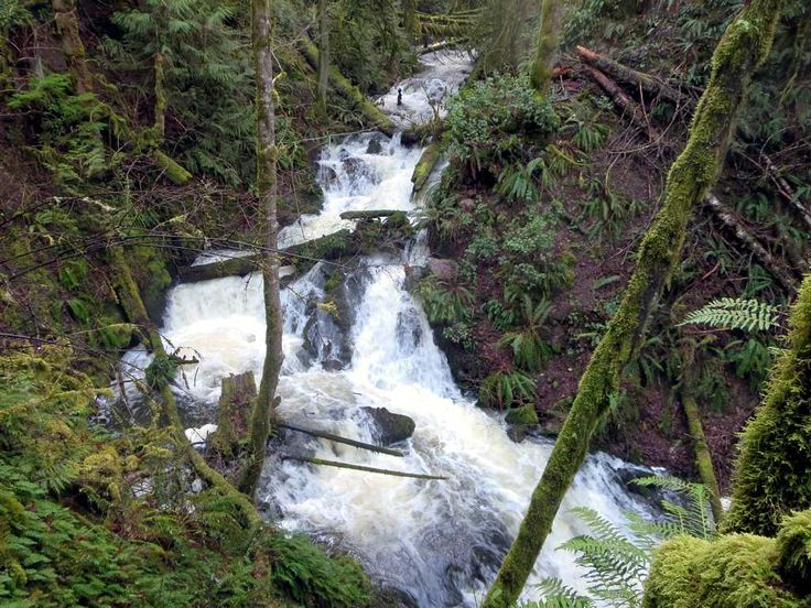 Tod Creek in Gowlland Tod Provincial Park drains much of the Lower Saanich Peninsula north of Victoria, British Columbia, Canada.